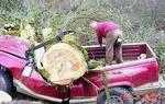 Tree on truck